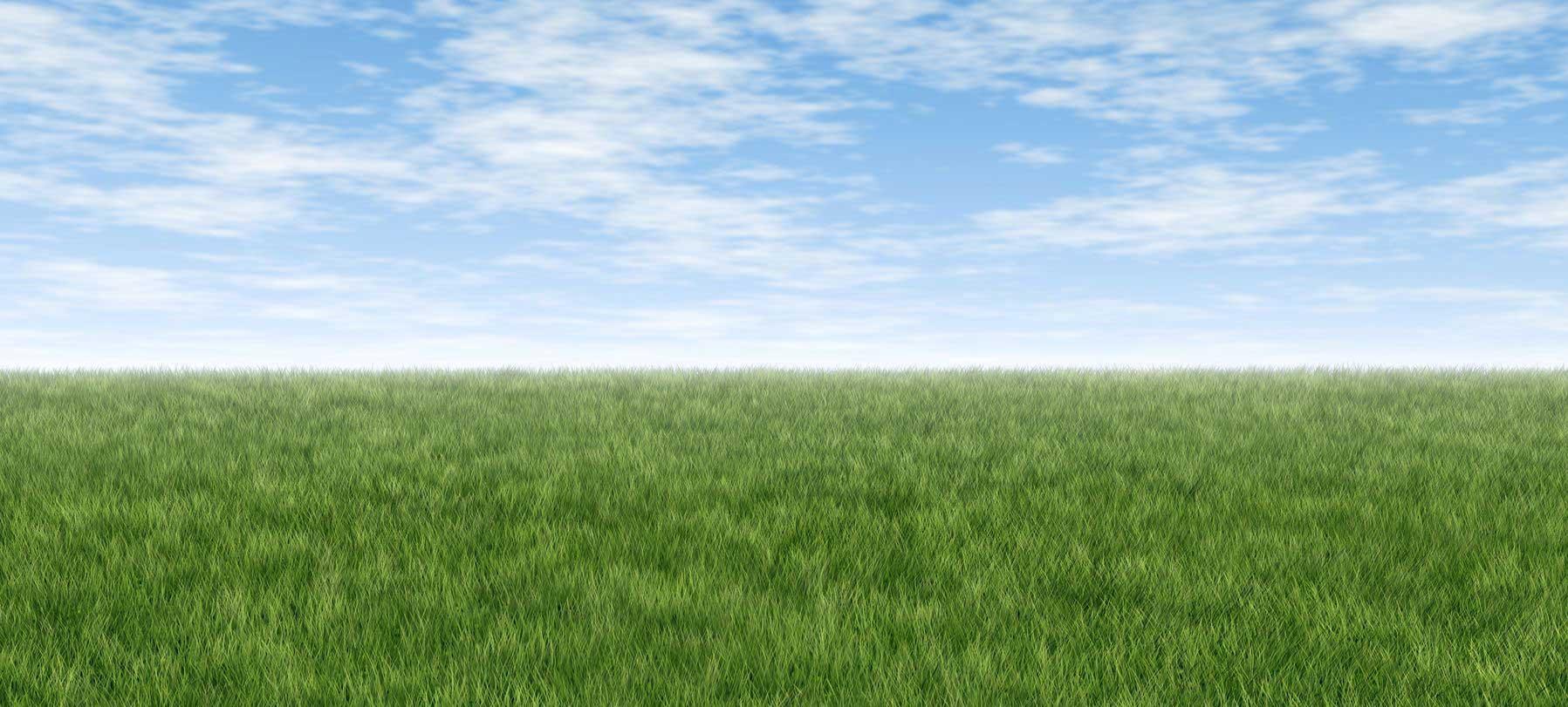 backgrass